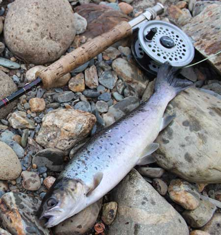 how to catch sea trout from shore